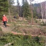 Lesostep vzniká za pomoci nezaměstnaných