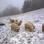 Pastva Jezerné